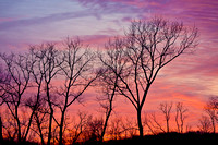 Bare Trees at Dawn, Newington, CT.