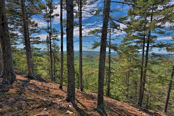 Trees on North Peak, Aroostook State Park
